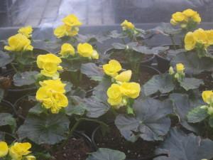 Kukat kuvattu Pukinmäen Puutarhassa.