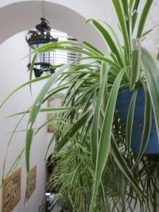 Ravintoloiden sisätiloissa on paljon komeita viherkasveja. Valkoisen rappauksen ja viherkasvien yhdistelmä on aina hyvä ja tehokas.