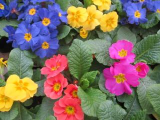 Sisusta kevät kukilla!